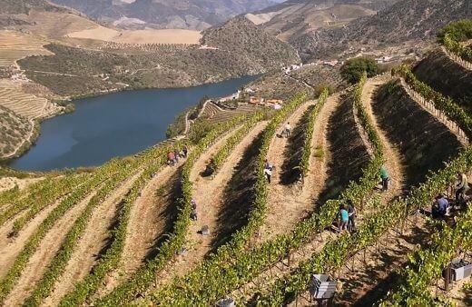 La vallée du Douro, berceau du porto, compte parmi les plus beaux et les plus anciens vignobles d'Europe. En 1756, elle devient la première...