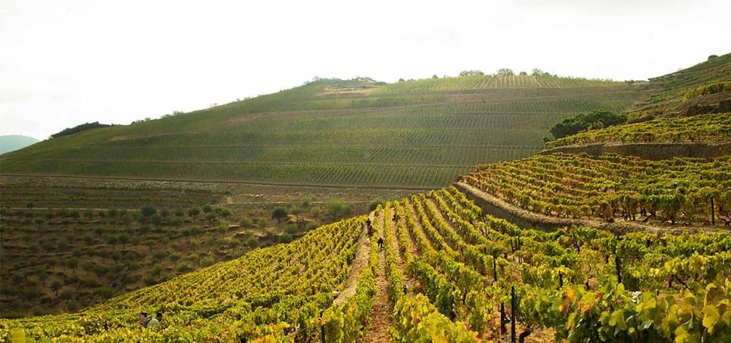 Port wine vineyards in the Douro Valley
