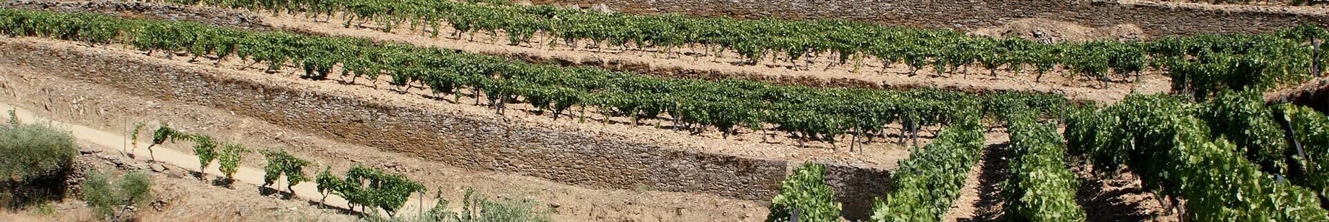 Port wine vineyards' soil in the Douro Valley