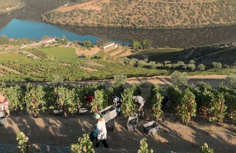 The Douro Valley is the largest area of hot climate mountain vineyard in the world. The vines at Quinta de Vargellas are planted on terraces built...