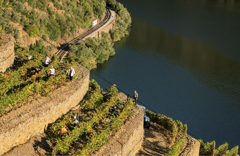 Quinta de Vargellas has some of the Douro Valley's most impressive historic vineyards, some of them with old walled terraces classified as...