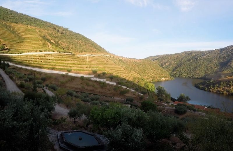 Sunrise at Quinta de Vargellas is breathtaking. This is how another harvest day began.    Follow us on social media for more 2020 Harvest...