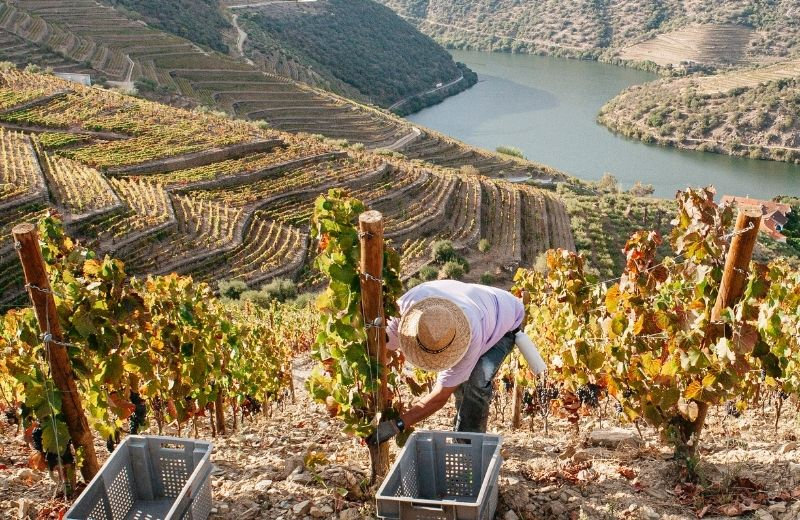 The harvest at Quinta de Vargellas ended last weekend. As always, it involved many days of hard work and dedication, and left us with some...