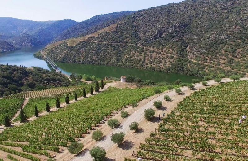 The privilege of harvesting surrounded by stunning landscapes, with an amphitheatre of terraced vineyards rising over a tranquil Douro...