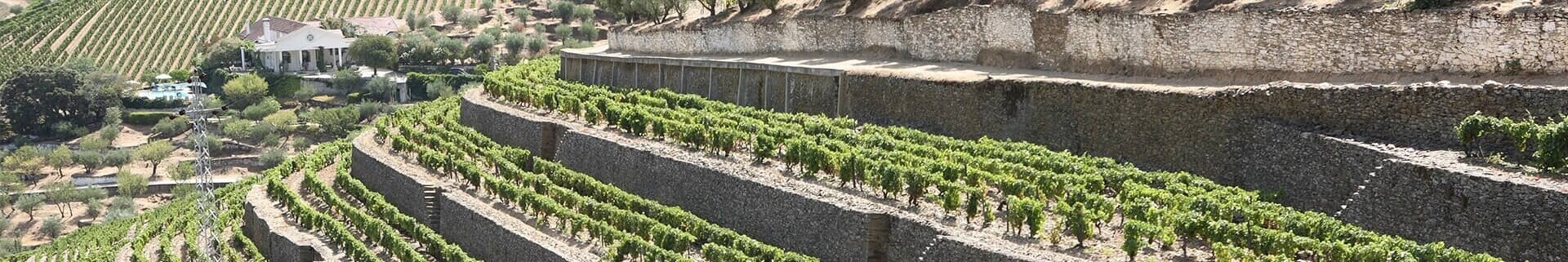 The old walled terraces of the Vinha Velha represent the original part of the Vargellas estate and contain its oldest vines.  They have been...