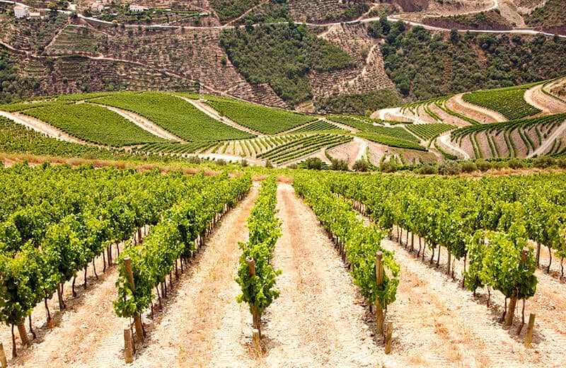 Climatic conditions suggest an early quality Port harvest in the Douro Valley, Portugal.
