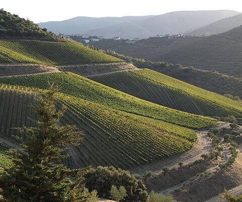 Port wine vineyards landscape in the Douro Valley, Portugal