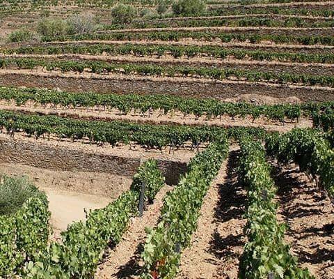 Port wine vineyards in the Douro Valley