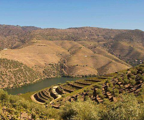 Port wine quintas and vineyards in the Douro Valley