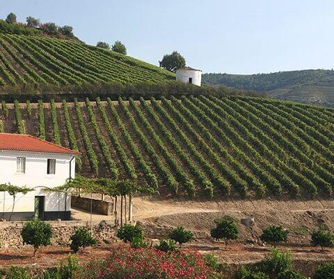 Like those of Vargellas, the wines of the beautiful old property of Terra Feita are an essential component of the Taylor Vintage Port blend. The...