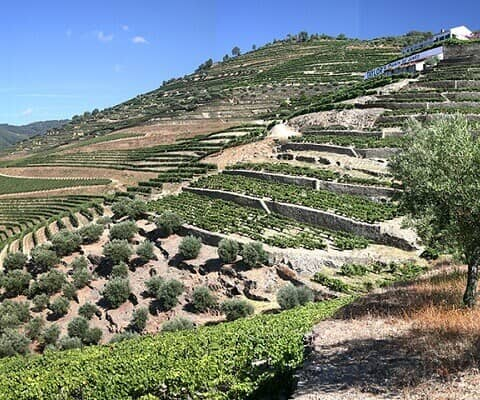 The magnificent old estate of Quinta do Junco is among the most well-known of the historic Pinhão Valley vineyards. Many visitors first...